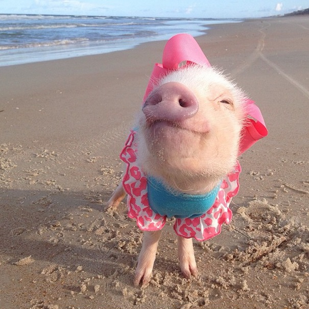 prissy-at-the-beach
